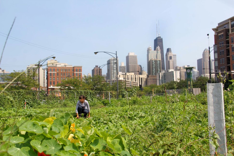 City Farm Chicago and Carhartt