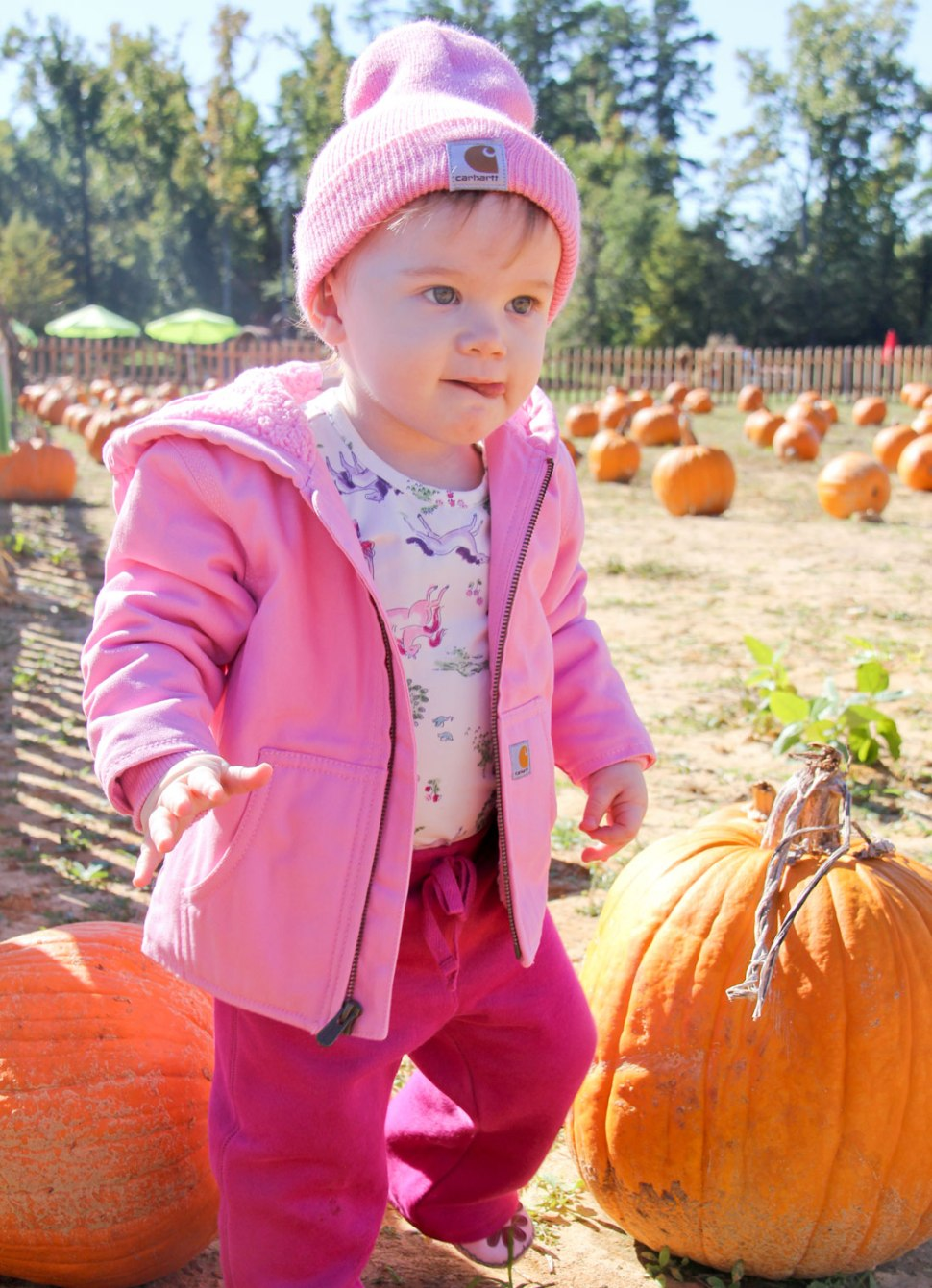 Carhartt pumpkin patch