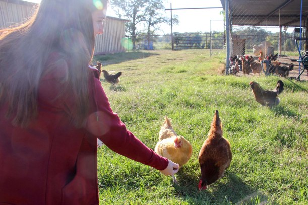chickens and Carhartt