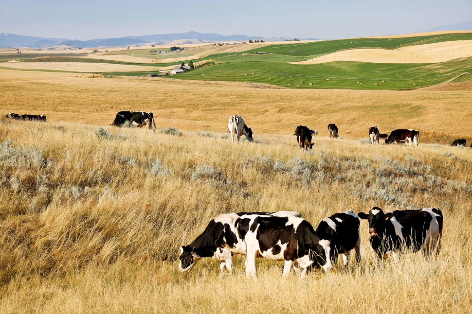 A Montana Dairy Farm / Crafted in Carhartt