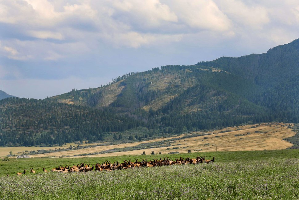 Montana Horses / Crafted in Carhartt