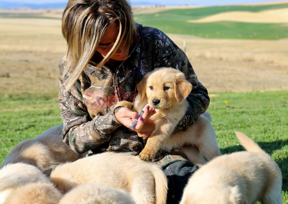 Puppies and Carhartt
