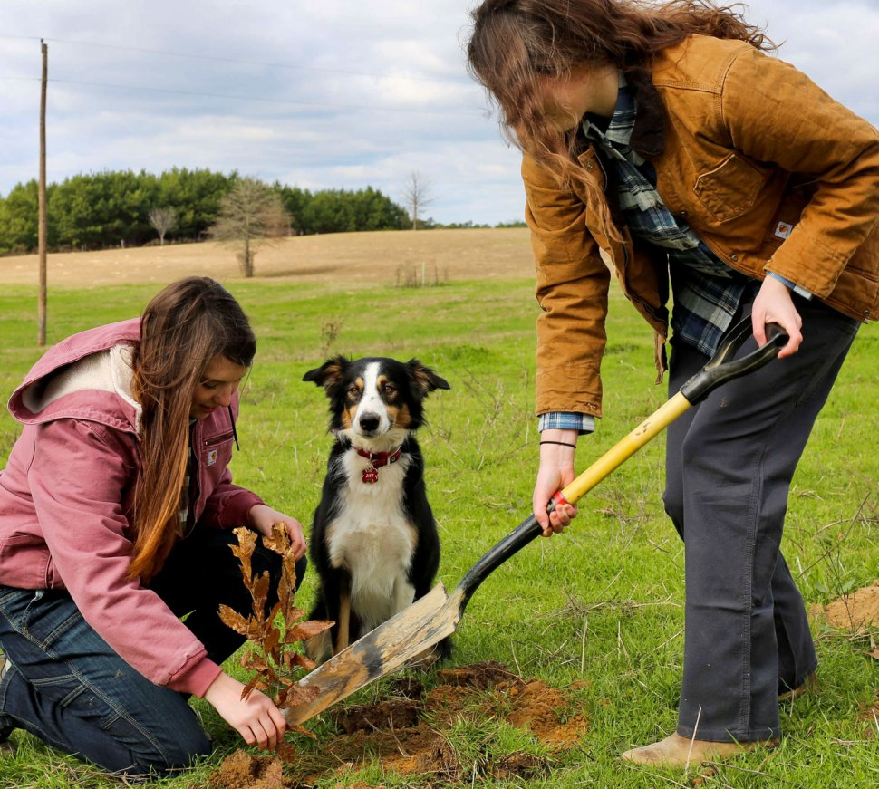 How to Plant a Tree / Crafted in Carhartt