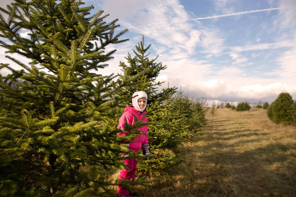 Tree Farm with Krtistine Bolhuis / Crafted in Carhartt