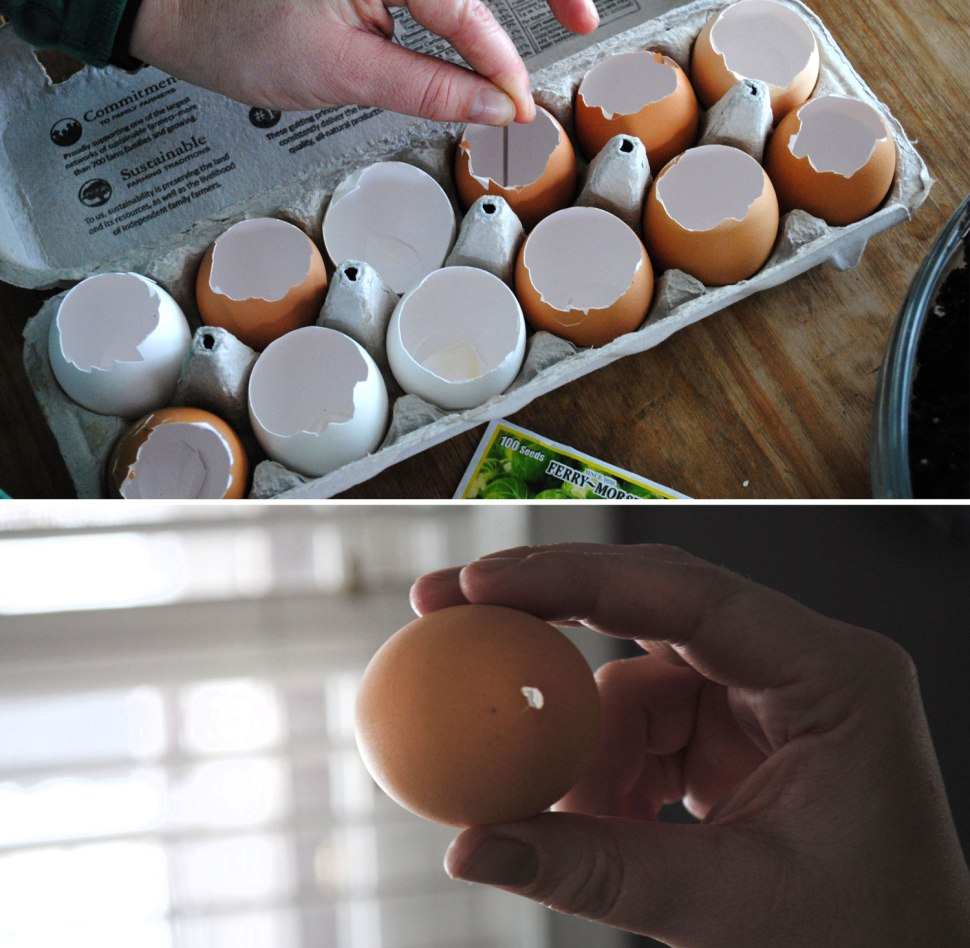 DIY Eggshell Seedlings / Crafted in Carhartt