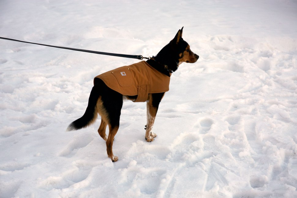 Dog Chore Coat / Crafted in Carhartt