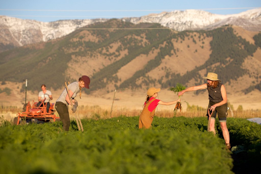 Amalthea Dairy Farm in Montana / Crafted in Carhartt