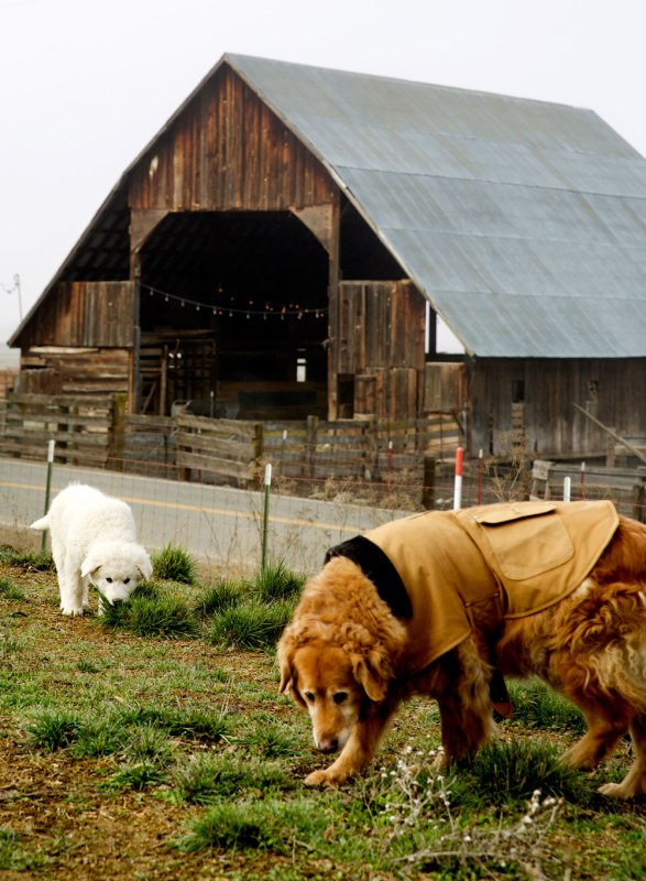 Five Marys Farms & Five Marys Burgerhouse / Crafted in Carhartt