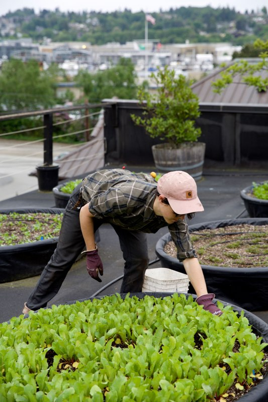 Seattle Urban Farm Company / Crafted in Carhartt
