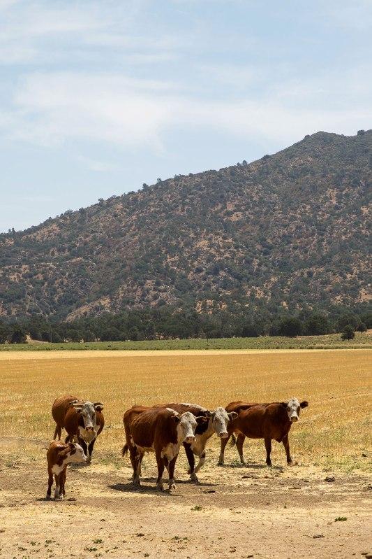Rankin Ranch / Crafted in Carhartt