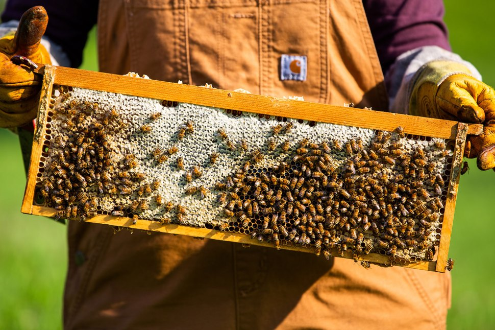 Messner Bee Farm in Kansas City / Crafted in Carhartt