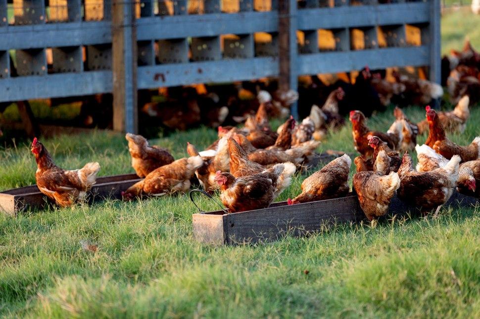 Yonder Way Farm / Crafted in Carhartt