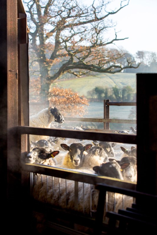Hare Farm Hideaways in Sussex / Crafted in Carhartt